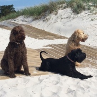 Jules Nilsson - The Hounds of Falsterbo